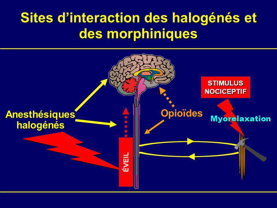 Sites d'interaction des halogénés et des morphiniques