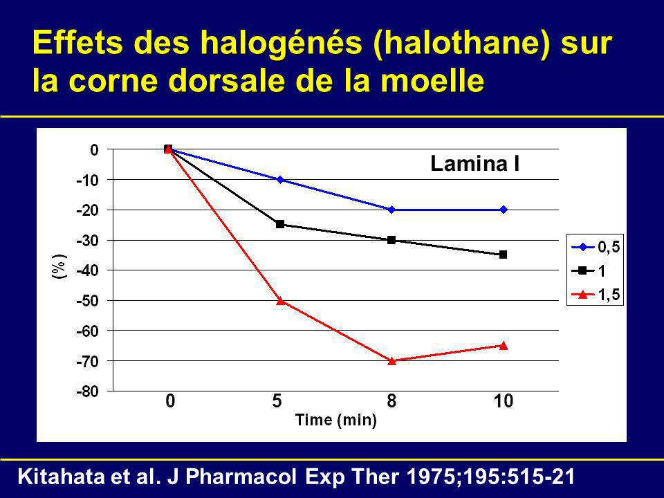 Effets des halogénés (halothane) sur la corne dorsale de la moelle