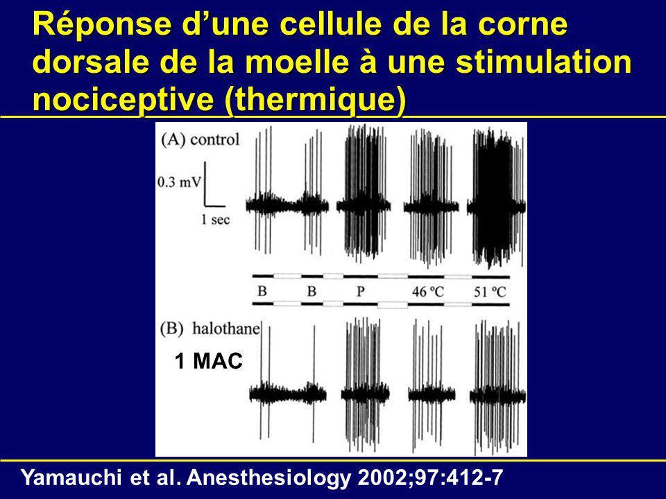 Réponse d'une cellule de la corne dorsale de la moelle à une stimulation nociceptive (thermique)