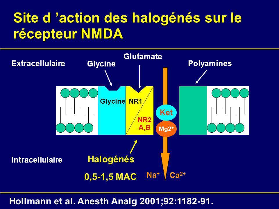 Site d 'action des halogénés sur le récepteur NMDA