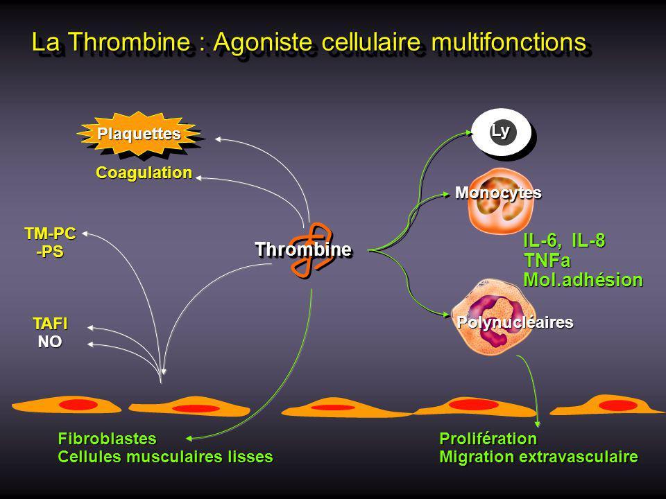 La Thrombine : Agoniste cellulaire multifonctions