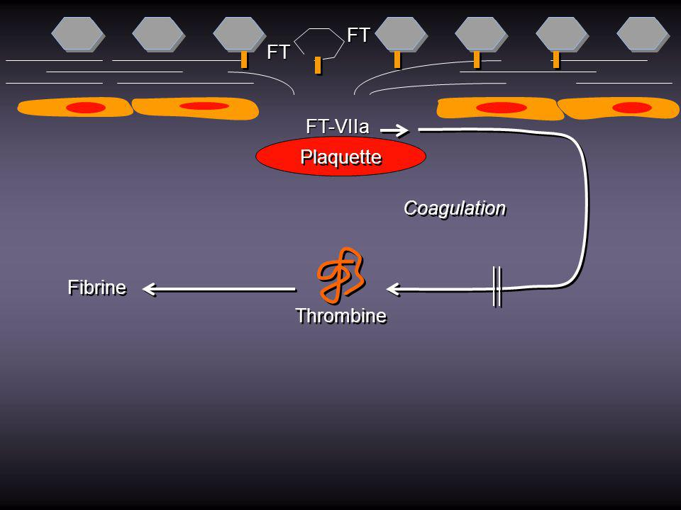 FT FT FT-VIIa Plaquette Coagulation Fibrine Thrombine