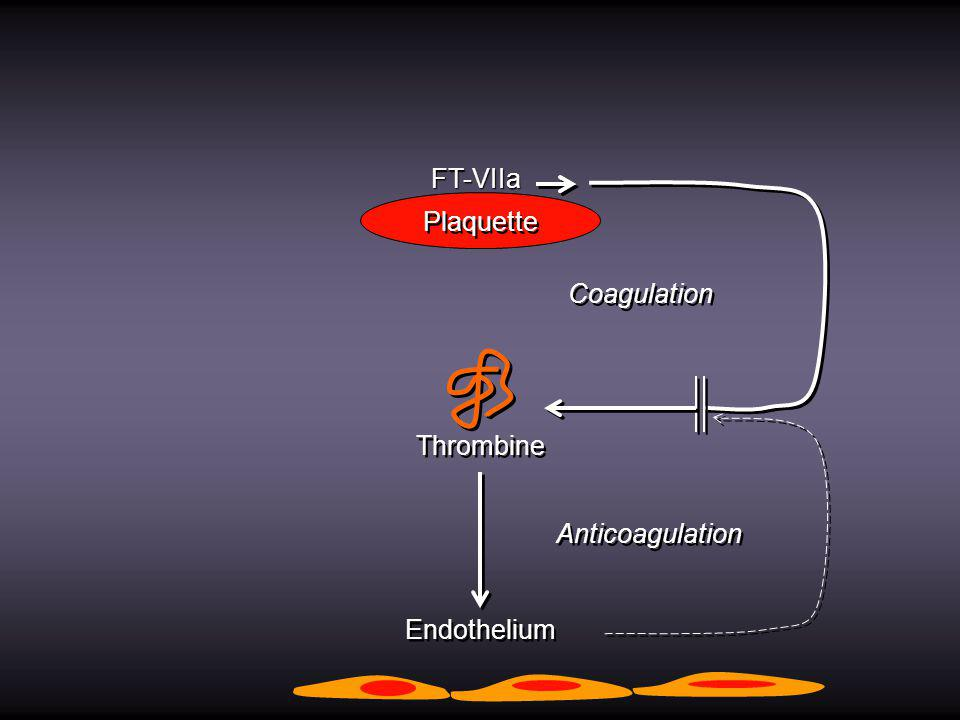 FT-VIIa Plaquette Coagulation Thrombine Anticoagulation Endothelium