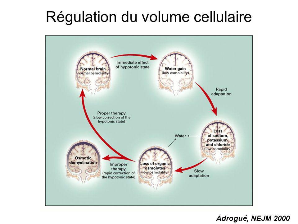 Régulation du volume cellulaire