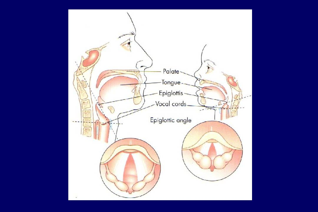 Quelques rappel anatomiques et leurs implications physiologiques: