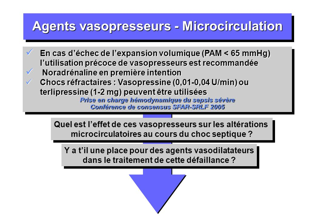 Agents vasopresseurs - Microcirculation