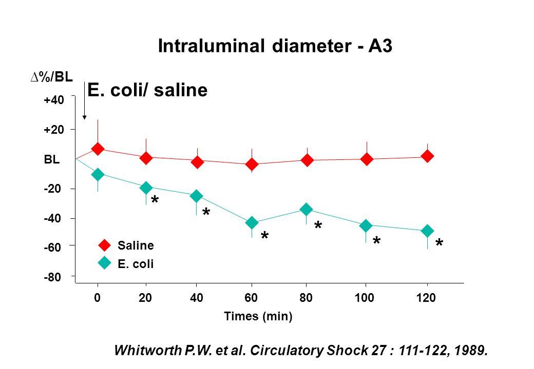 * * * * * * Intraluminal diameter - A3 E. coli/ saline ∆%/BL