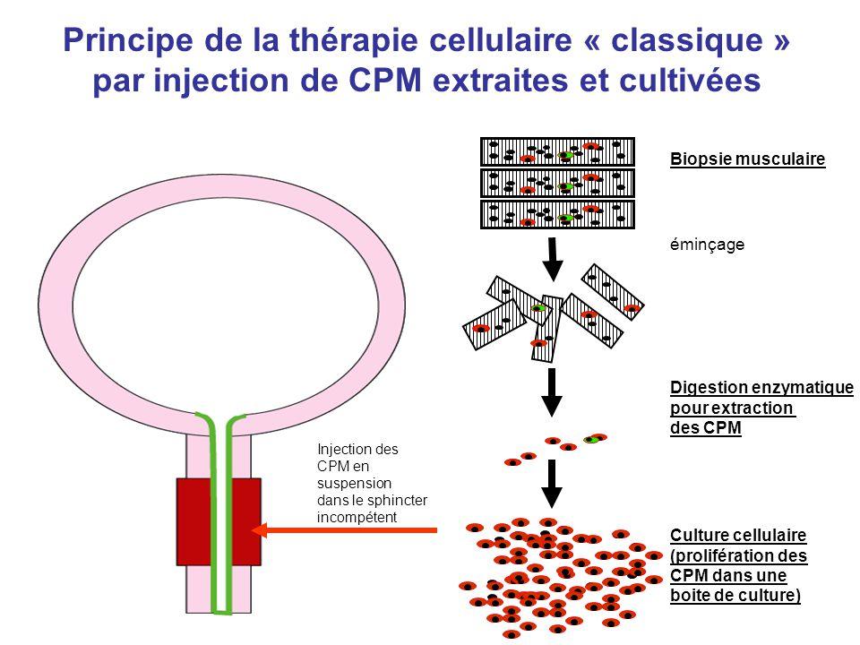 Principe de la thérapie cellulaire « classique » par injection de CPM extraites et cultivées