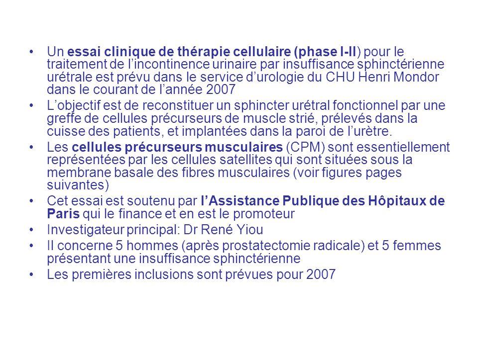 Un essai clinique de thérapie cellulaire (phase I-II) pour le traitement de l'incontinence urinaire par insuffisance sphinctérienne urétrale est prévu dans le service d'urologie du CHU Henri Mondor dans le courant de l'année 2007