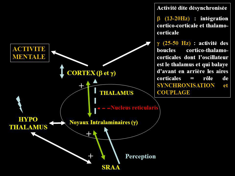 Noyaux Intralaminaires (g)