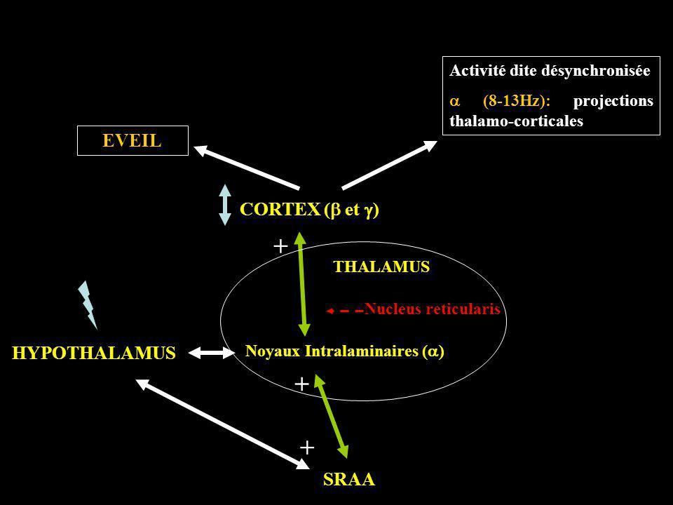 Noyaux Intralaminaires (a)