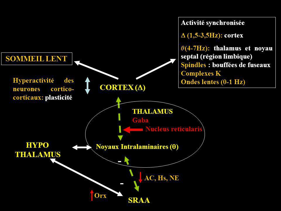 Noyaux Intralaminaires (q)