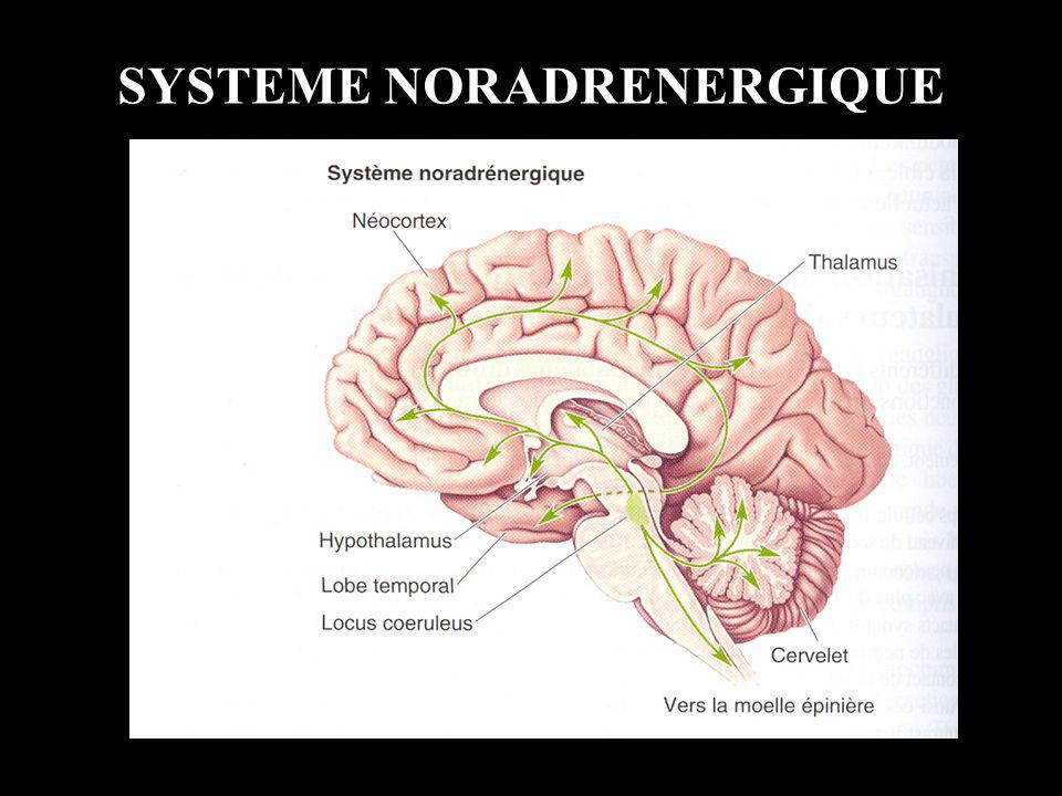 SYSTEME NORADRENERGIQUE