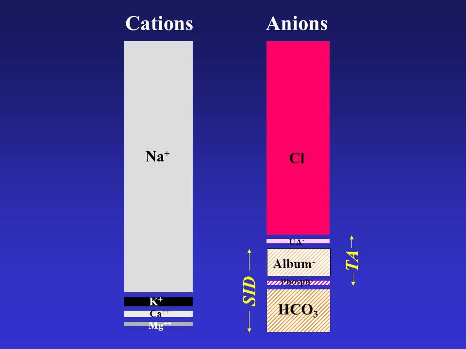 Cations Anions Na+ K+ Mg++ Ca++ Cl- UA- TA SID Album- HCO3- Phosph-