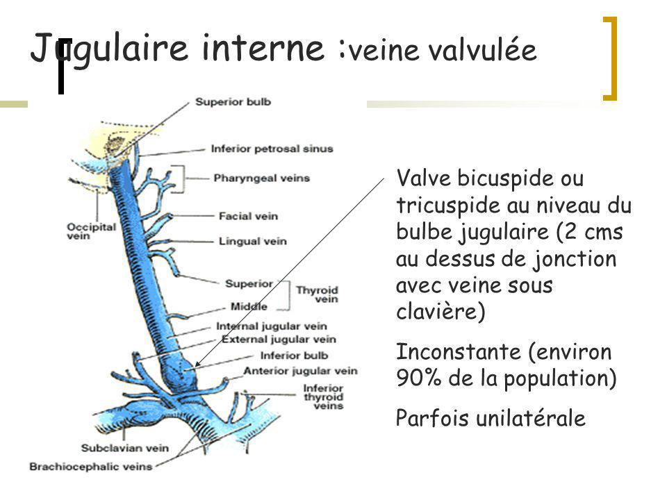 Jugulaire interne :veine valvulée