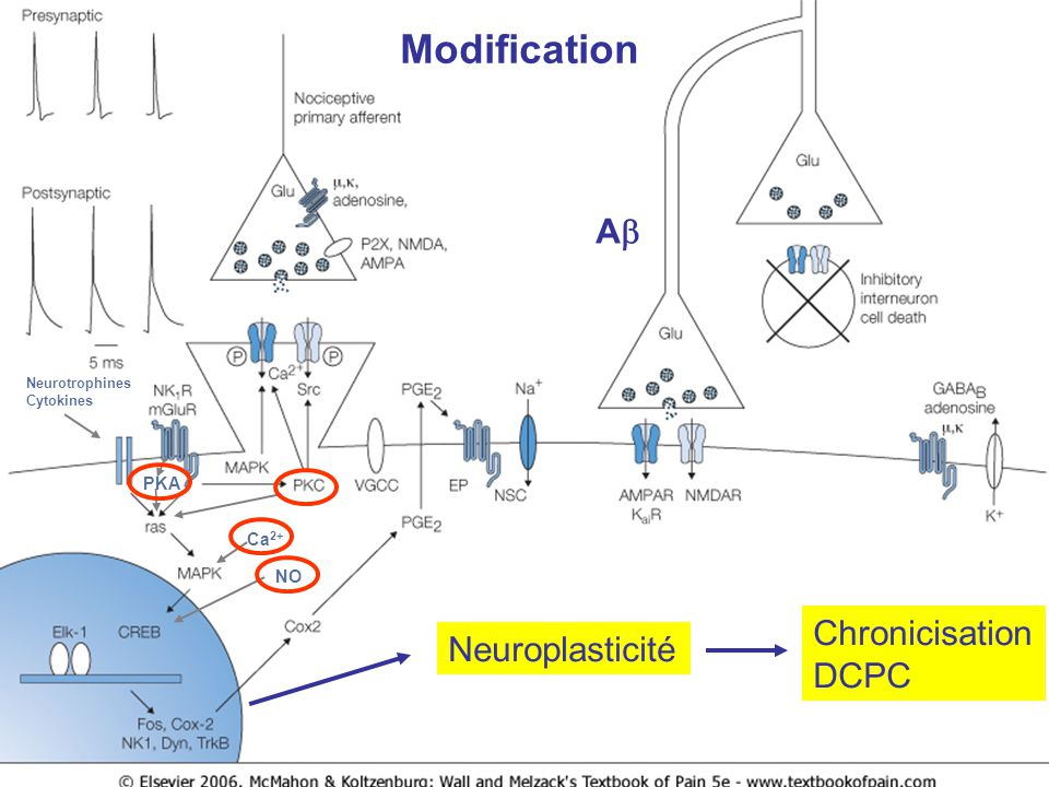 Modification Ab Chronicisation Neuroplasticité DCPC PKA Ca2+ NO