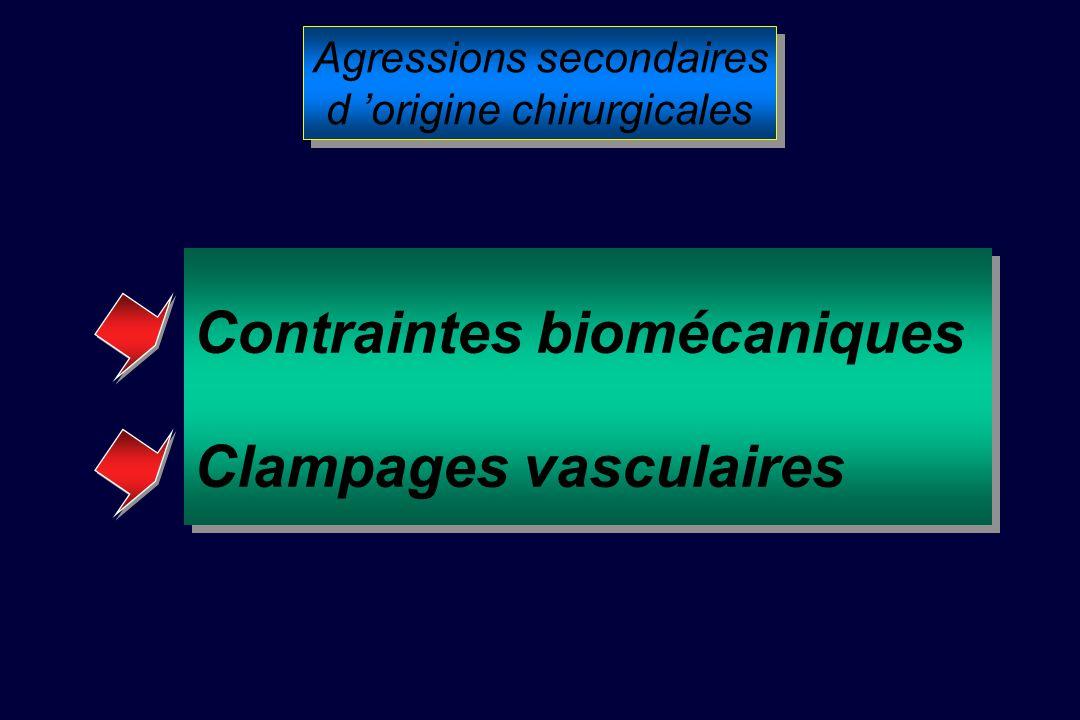 Contraintes biomécaniques Clampages vasculaires