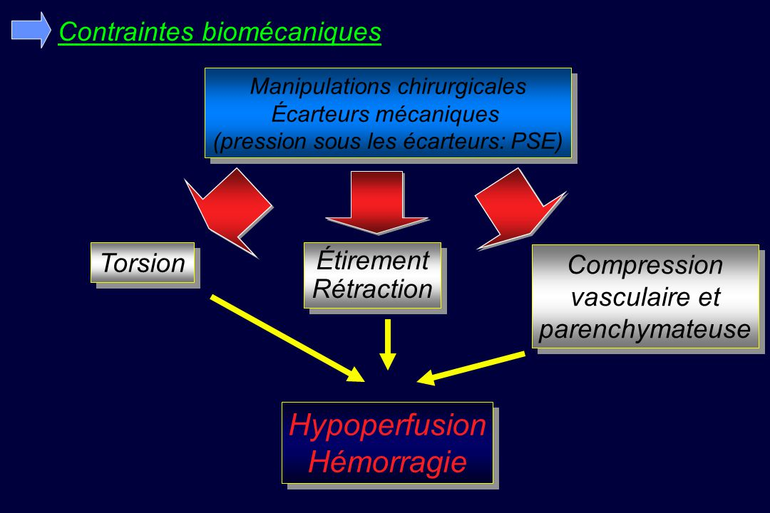 Hypoperfusion Hémorragie Contraintes biomécaniques Torsion Étirement