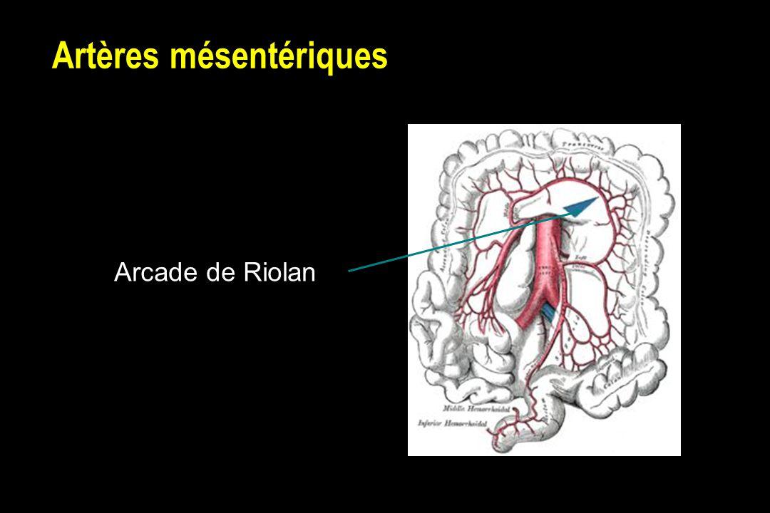 Artères mésentériques