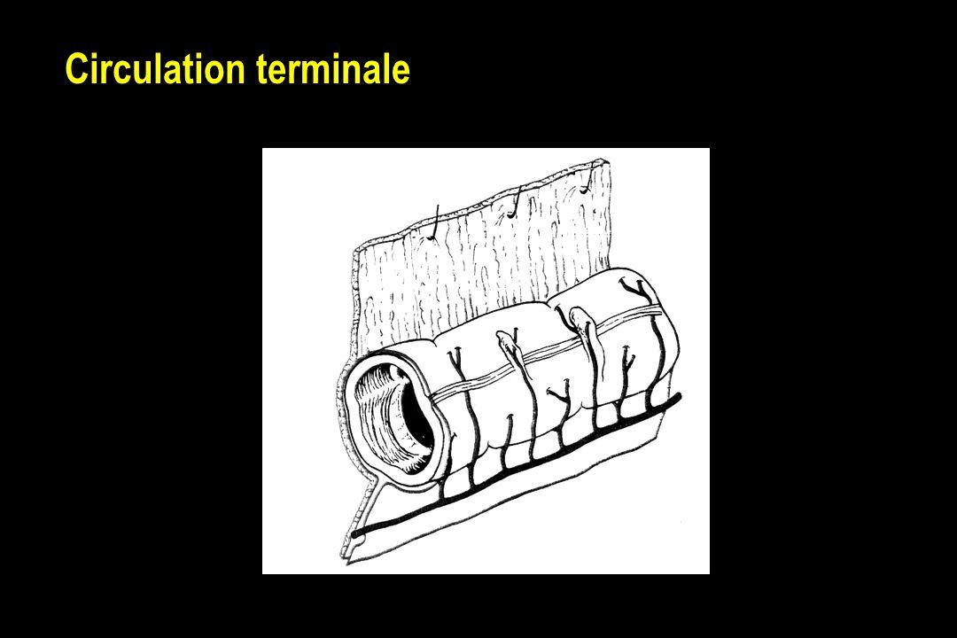Circulation terminale
