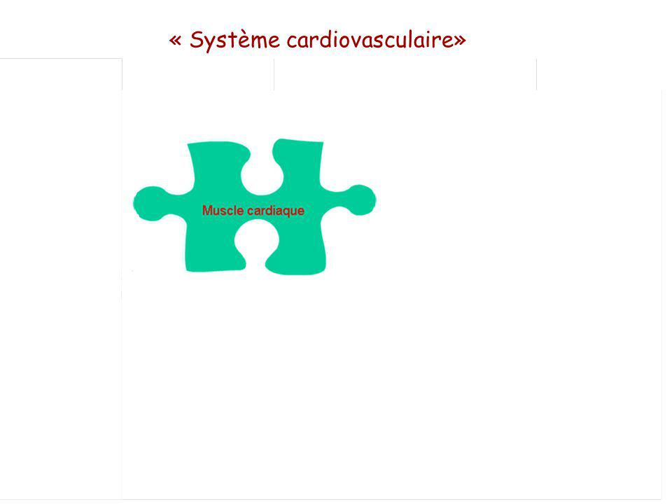 « Système cardiovasculaire»