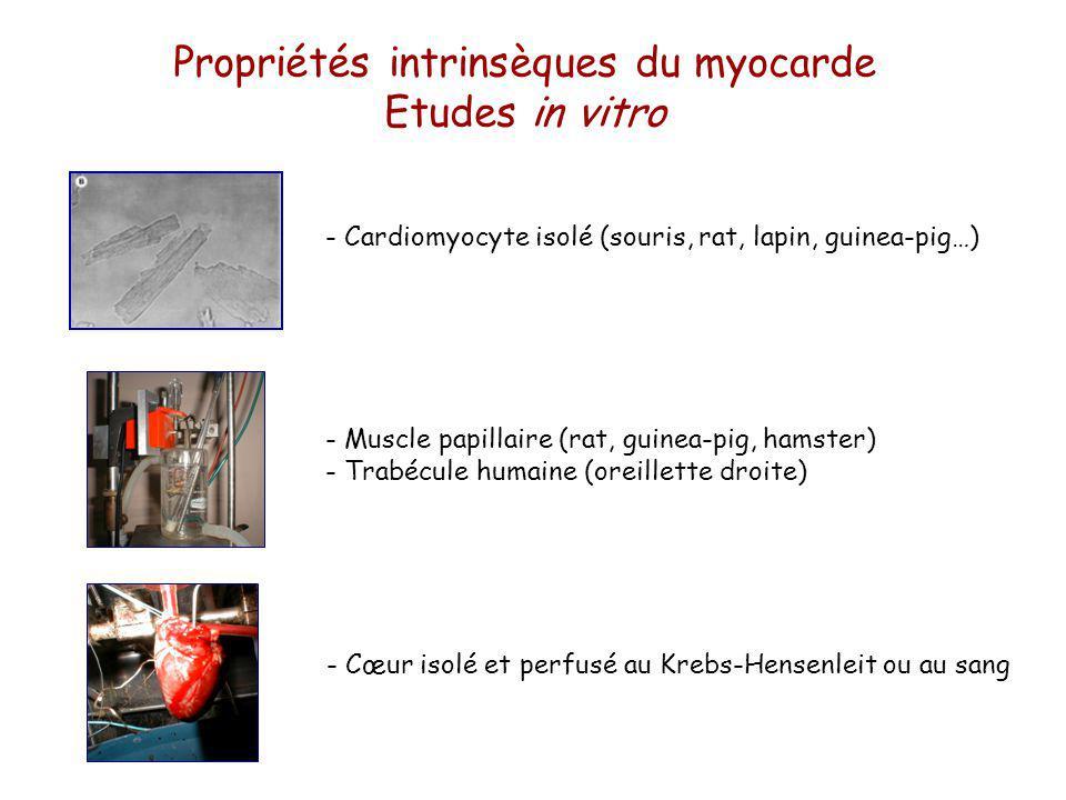 Propriétés intrinsèques du myocarde Etudes in vitro