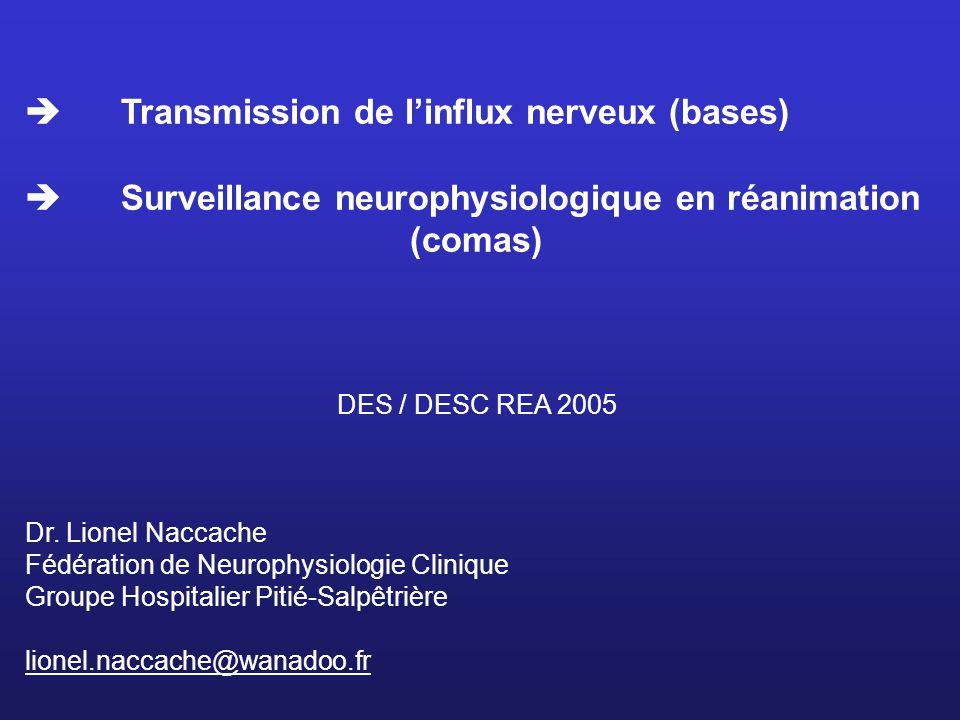  Transmission de l'influx nerveux (bases)