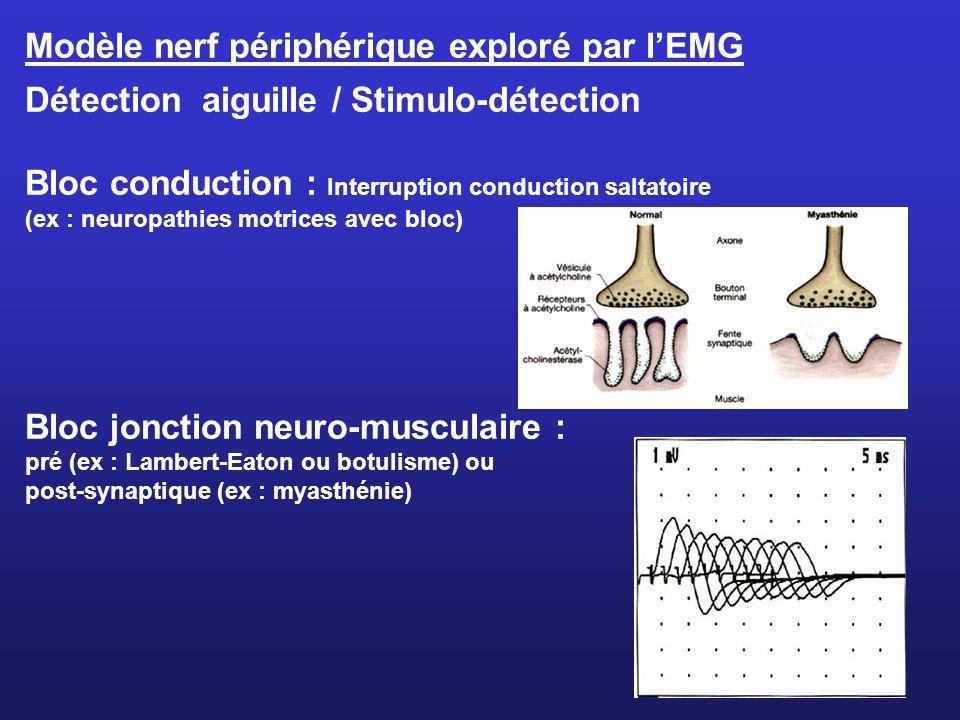 Modèle nerf périphérique exploré par l'EMG