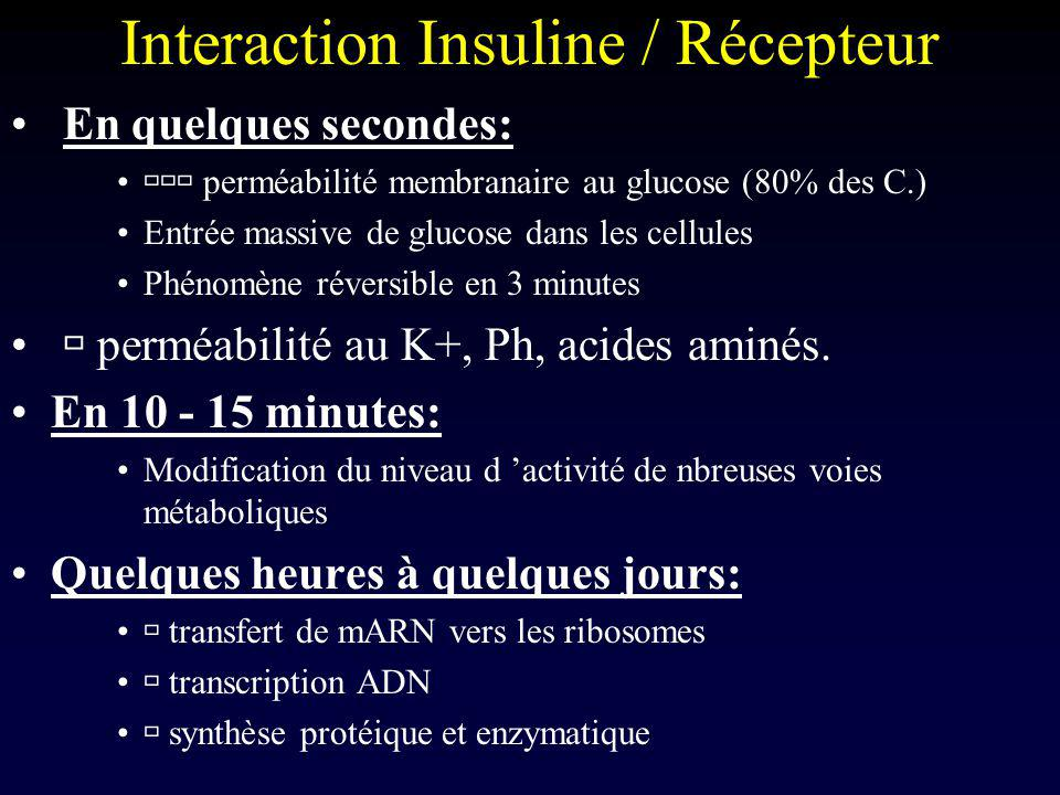 Interaction Insuline / Récepteur