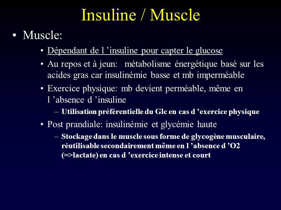 Insuline / Muscle Muscle: