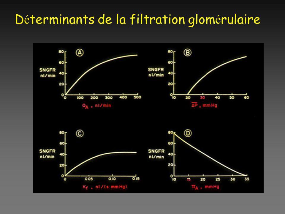 Déterminants de la filtration glomérulaire