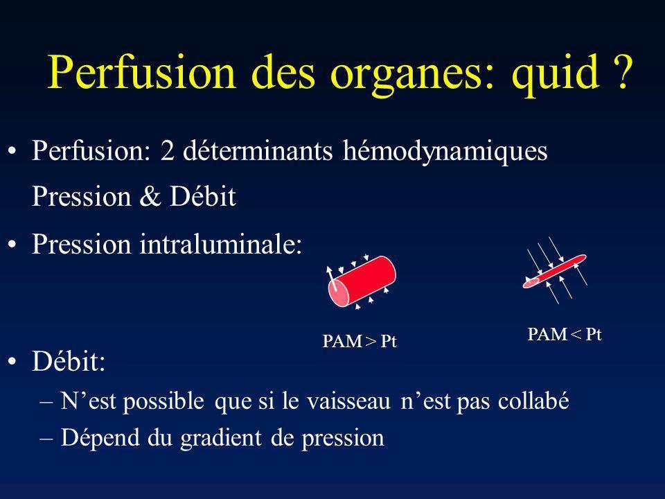 Perfusion des organes: quid