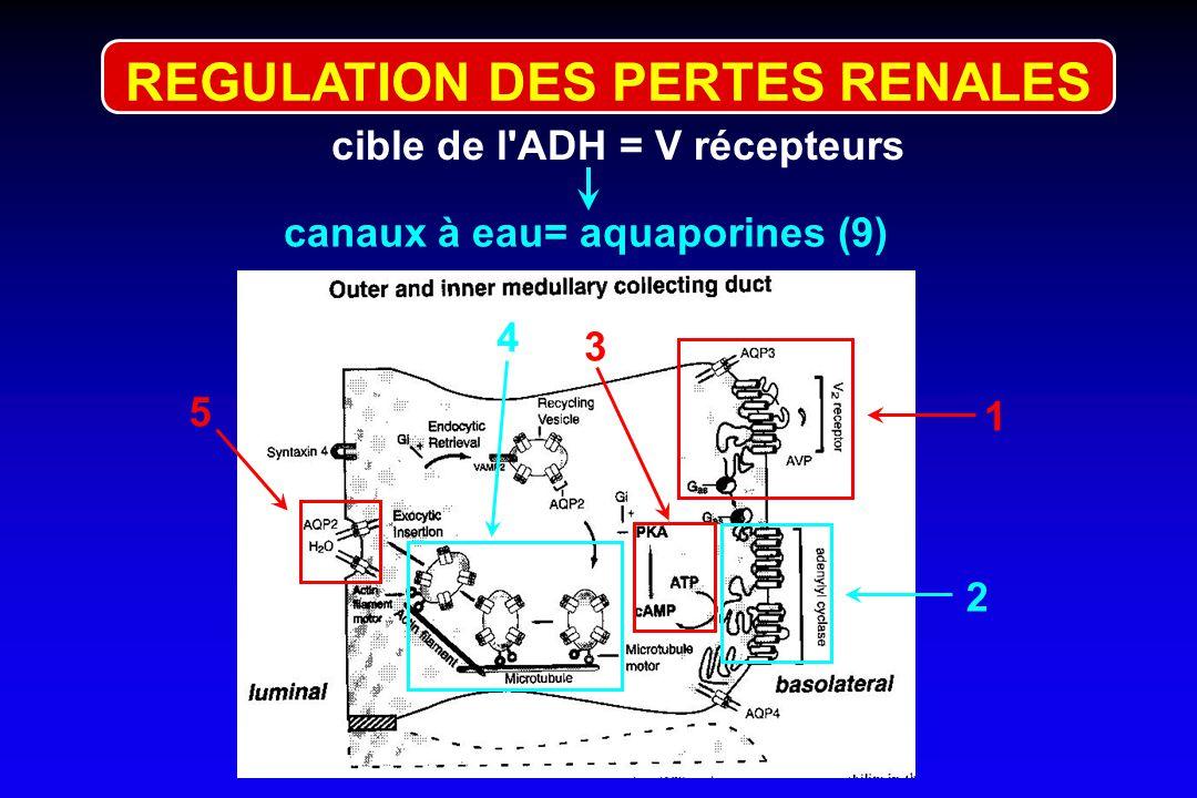 REGULATION DES PERTES RENALES