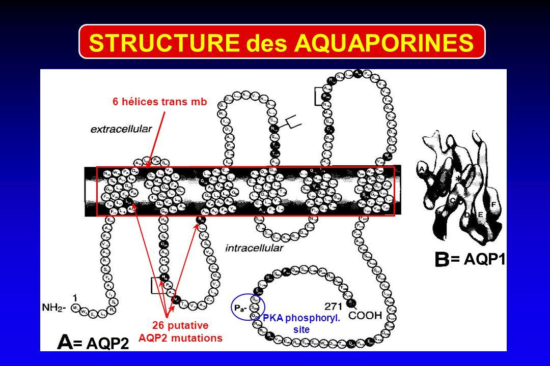 26 putative AQP2 mutations