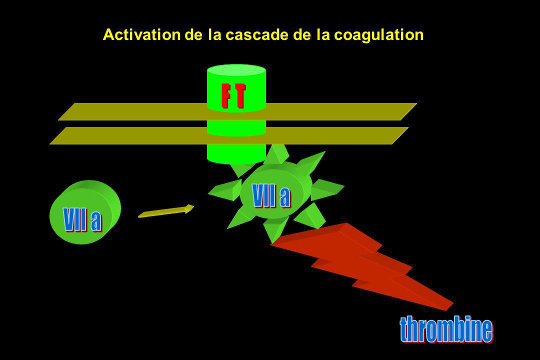 Activation de la cascade de la coagulation