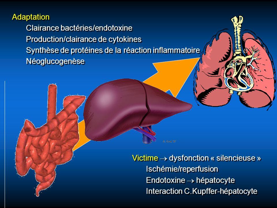 Adaptation Clairance bactéries/endotoxine. Production/clairance de cytokines. Synthèse de protéines de la réaction inflammatoire.