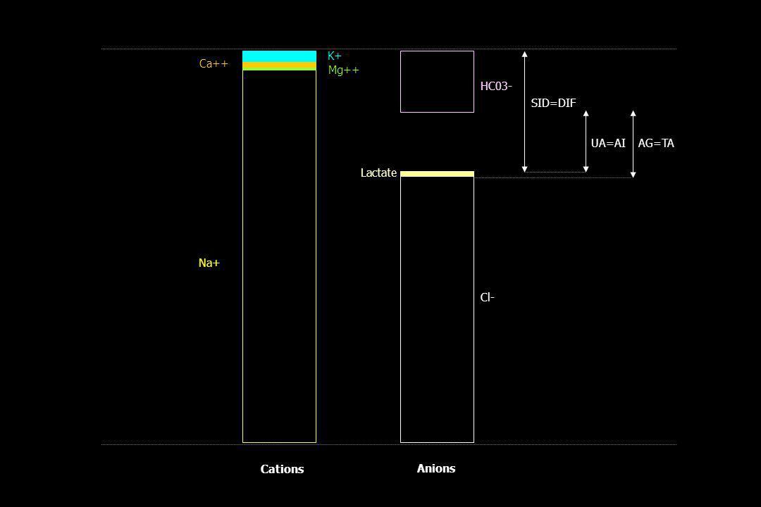 01/04/2017 K+ Ca++ Mg++ HC03- SID=DIF UA=AI AG=TA Lactate Na+ Cl- Cations Anions