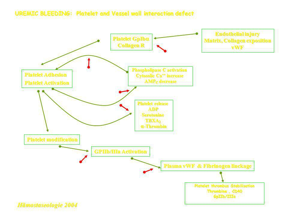 UREMIC BLEEDING: Platelet and Vessel wall interaction defect