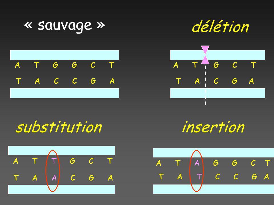 « sauvage » délétion substitution insertion A T G G C T T A C C G A