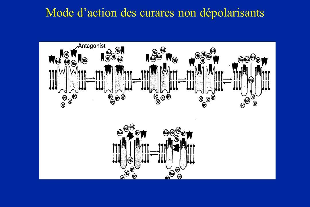 Mode d'action des curares non dépolarisants