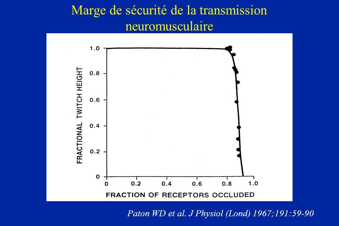 Marge de sécurité de la transmission neuromusculaire