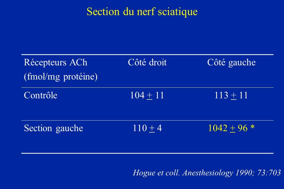 Section du nerf sciatique
