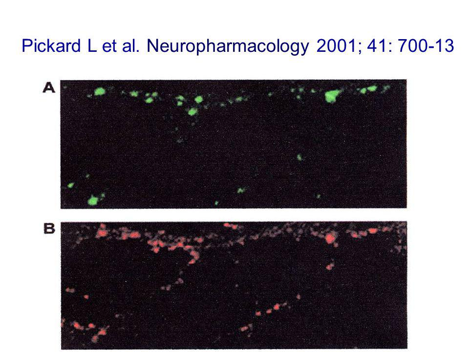 Pickard L et al. Neuropharmacology 2001; 41: 700-13