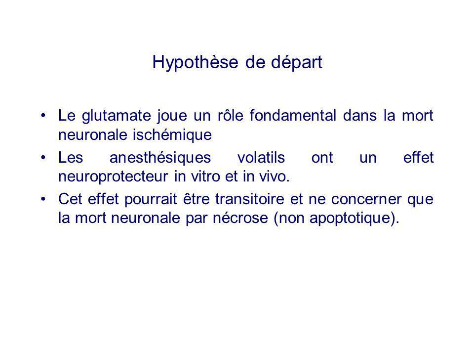 Hypothèse de départ Le glutamate joue un rôle fondamental dans la mort neuronale ischémique.