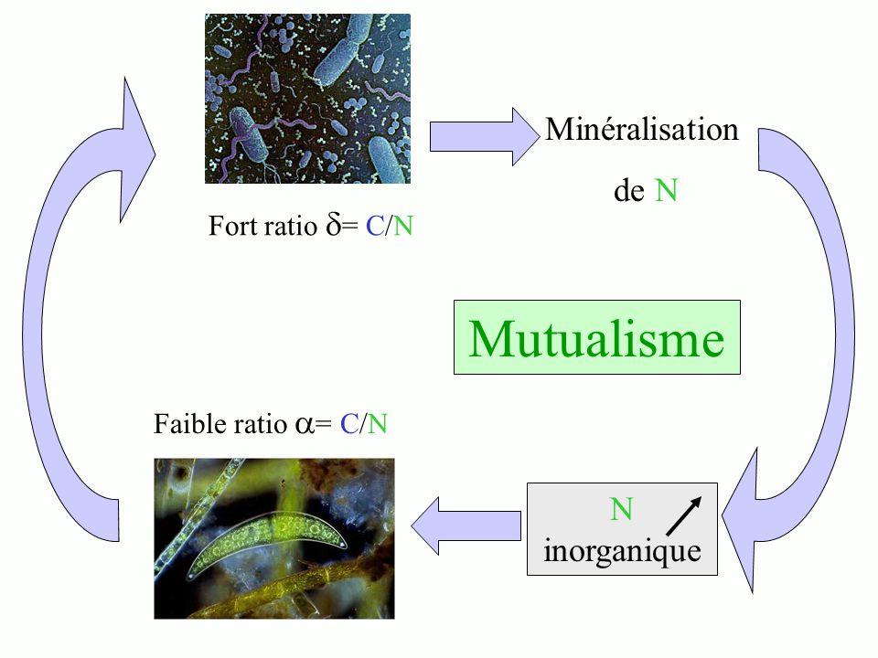 Mutualisme Minéralisation de N N inorganique Fort ratio = C/N