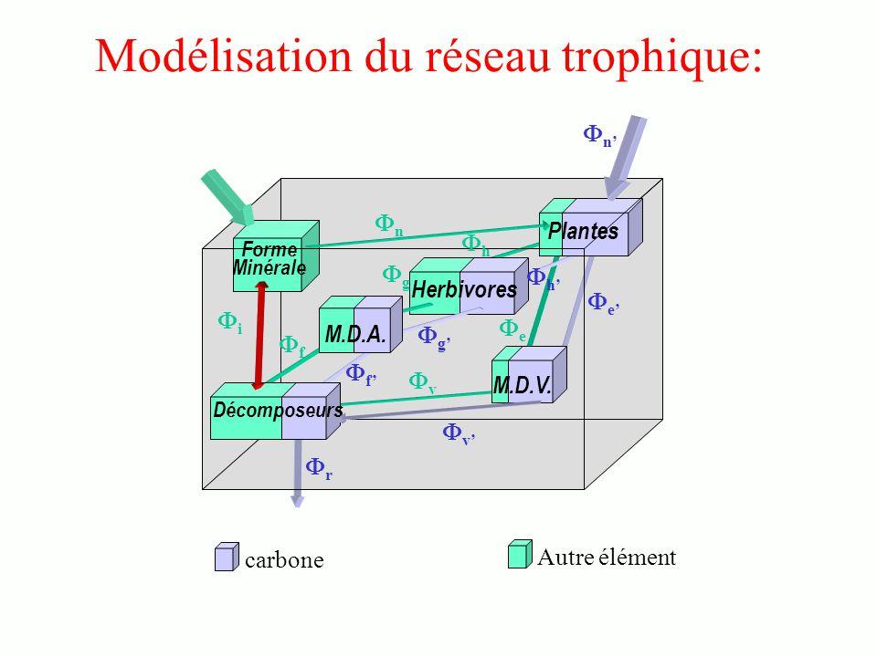 Modélisation du réseau trophique: