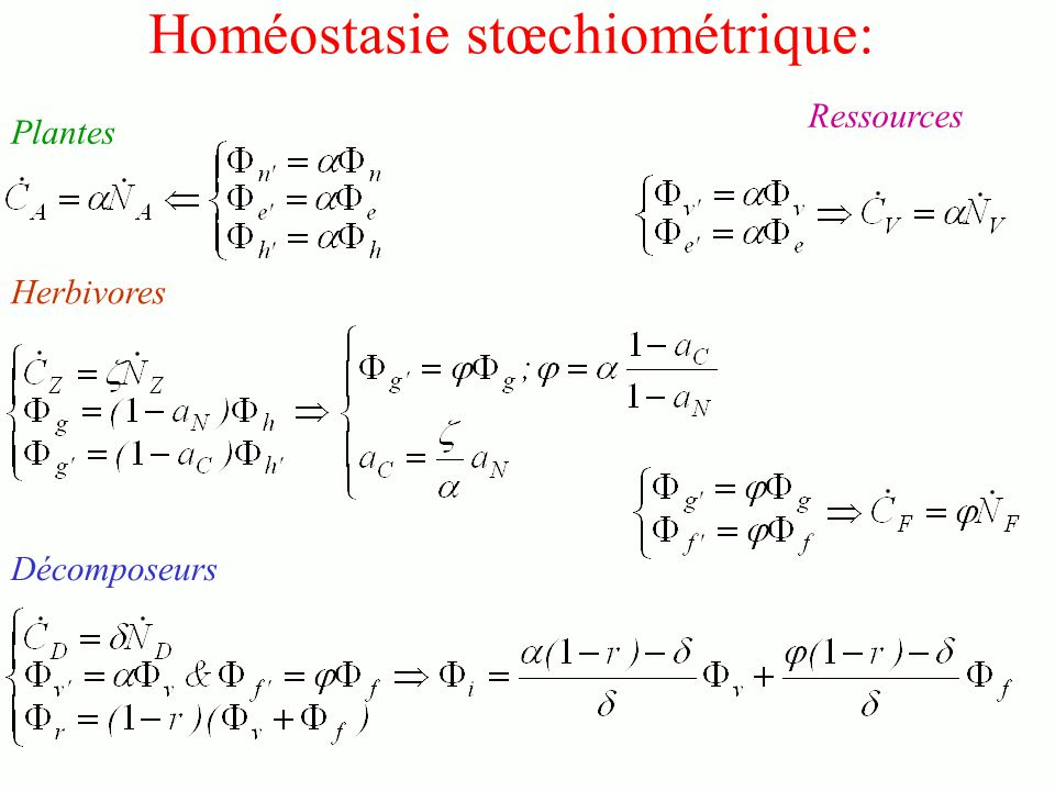 Homéostasie stœchiométrique: