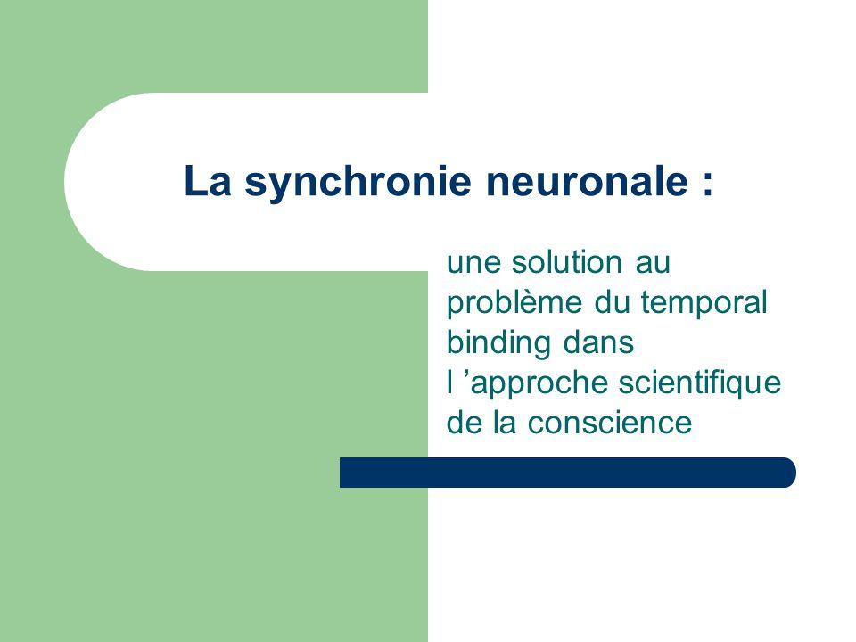 La synchronie neuronale :