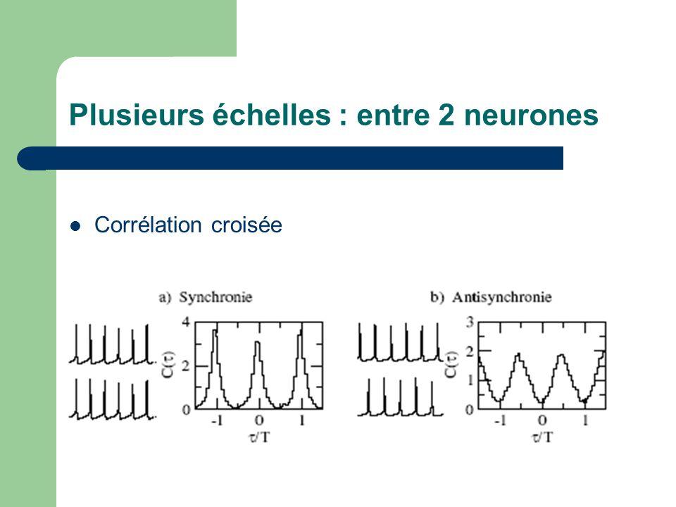 Plusieurs échelles : entre 2 neurones