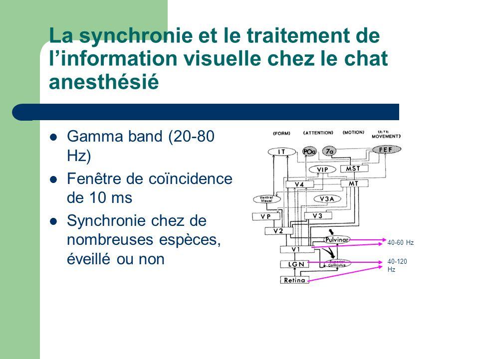 La synchronie et le traitement de l'information visuelle chez le chat anesthésié